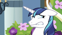 Shining Armor face S2E25