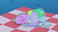Spike dormindo na poncheira T1E24