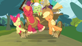 Apple Bloom, Big McIntosh and Applejack jumping S4E09.png