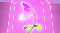 Enchanted flower glowing very brightly S9E22