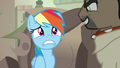 Rainbow Dash in a state of panic S7E18.png