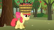 S02E15 Apple Bloom łapie jabłka do koszyka