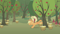 Applejack misses another tree S1E04.png