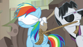 Withers ties up and blindfolds Rainbow Dash S7E18.png