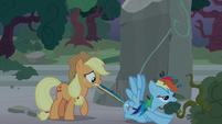 Applejack pulls Rainbow out of the bushes S7E25