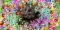 Bronyboybro cats 7.jpg