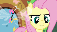 Fluttershy telling it like it is S4E16