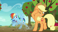 Rainbow Dash stopping in front of Applejack S8E5