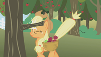 Applejack bonking her head S1E04