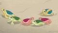Baby turtles waddling around aimlessly EGDS14.png