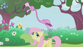 Fluttershy has a pink flamingo on her back S1E03.png