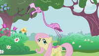 Fluttershy has a pink flamingo on her back S1E03