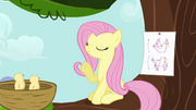 Fluttershy instructing birds S4E04