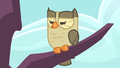 Owlowiscious hooting unamusedly S4E23.png