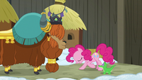 Pinkie Pie bowing to Prince Rutherford S7E11