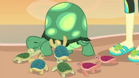 Baby turtles hugging Tank EGDS14