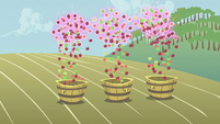Floating apples falling into buckets S1E04