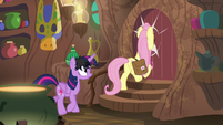 Fluttershy walks face-first into Zecora's door S7E20