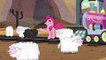 Pinkie curses the sheeps S5E11.png