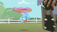 Rainbow Dash being stopped S2E03
