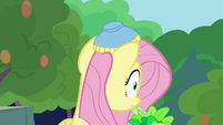 Angel's salad bowl on Fluttershy's head S8E4