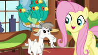Fluttershy singing next to a goat S5E3