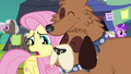 Fluttershy unsure of the trade's conditions S4E22.png