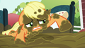 Applejack covered in mud S6E15.png