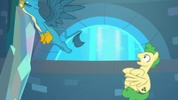 Gallus pulls his tail free from stallion S8E26