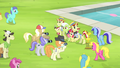 Ponies gathering around Bloom, Granny, Flim, and Flam S4E20.png
