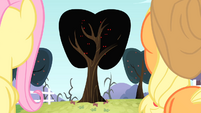Applejack and Fluttershy looking at the tree covered by bats S4E07