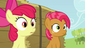 Babs and Apple Bloom hearing Applejack S3E08.png