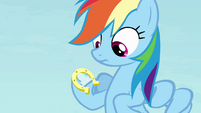 Rainbow with a horseshoe on her hoof S4E10