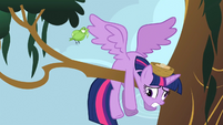 Twilight having smacked into a tree branch S4E01