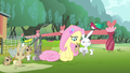 Fluttershy 'you didn't hear me' S4E14.png