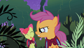 Apple Bloom sticks her tongue out at Scootaloo S1E17.png
