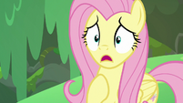 Fluttershy concerned about Zecora S7E20