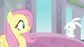 Angel Bunny disappointed in Fluttershy S8E1.png