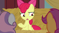 "Apple Bloom ""right in front of our noses"" S8E10.png"