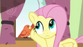 Fluttershy listening to Constance S6E11.png