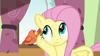 Fluttershy listening to Constance S6E11