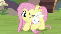 Fluttershy nuzzles Angel against his will S9E18