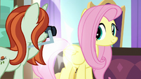 Photographer taking Fluttershy's picture S8E13