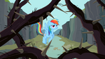 Rainbow Dash looking at the thorny vines S2E07