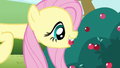 Fluttershy biting hold S3E3.png