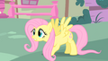 Fluttershy lands on the ground S1E17.png