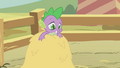Spike on a haystack S1E13.png