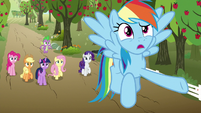 "Rainbow ""that thing knows what 'small' is"" S9E13"
