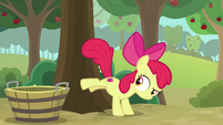 Apple Bloom bucking for apples S9E10