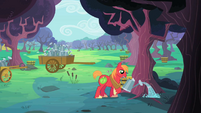 Big McIntosh watering a zap apple tree S2E12